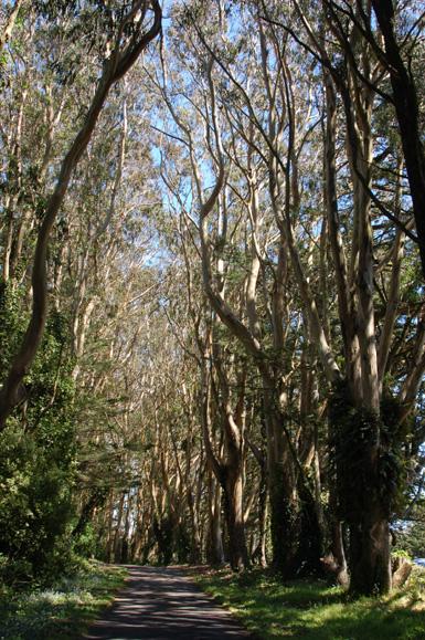 10eucalyptus-avenue.jpg