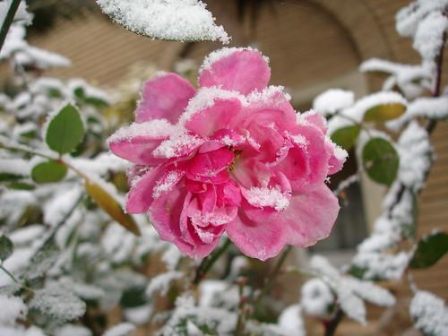 Flor con nieve