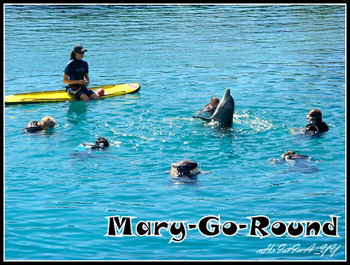 Sea World : Mary-Go-Around