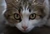 This cat still hate me - Cette chatte me déteste toujours (Luc Deveault) Tags: canada animal cat 50mm crazy chat dof quebec bokeh 14 pussy québec luc fou chatte deveault lucdeveault