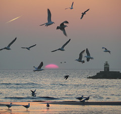 Seagulls mobbing behavior (Bn) Tags: sunset seagulls lighthouse beach topf50 romantic soe vuurtoren topf200 meeuwen northseacanal wijkaanzee velsennoord blueribbonwinner 50faves 200faves xxxooo 35faves abigfave platinumphoto aplusphoto hieraandekust flickrplatinum diamondclassphotographer megashot myfairytale theunforgettablepictures brillianteyejewel fiveflickrfavs theperfectphotographer goldstaraward 50earthfaves 100earthcomments beautifulsecrets runtowardstheseagulls mobbingbehavior gullshovers runningtowardstheseagull obq toscarethemforthephoto superbmasterpieceplatinumphoto