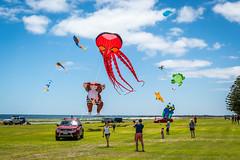 Kite Flying on Australia Day
