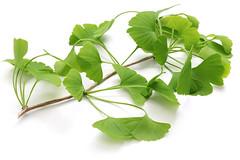 3 plante care iti protejeaza sistemul nervos si scad riscul de dementa (teachivu) Tags: 3 plante care iti protejeaza sistemul nervos si scad riscul de dementa