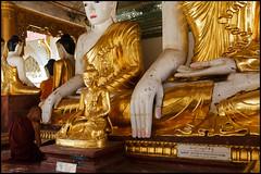 Contemplation (Armin Fuchs) Tags: arminfuchs myanmar yangon shwedagonpagoda monk buddha gold red