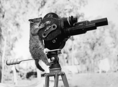 無料写真素材, 動物 , 哺乳類, ポッサム, モノクロ, ムービーカメラ