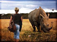 meeting the rhino