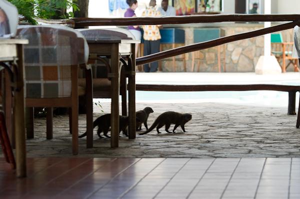 RYALE_Rwanda_Uganda_Safari-326