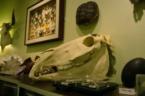 Horse Skull