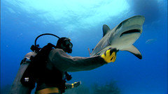 Rob Stewart Diving with Sharks