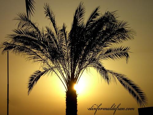 rosando la palmera