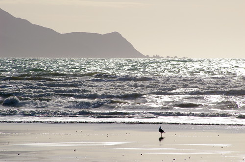 Solitary Bird on Beach