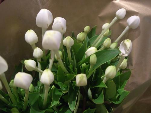 Bouvardia longiflora - The Kenny Special