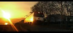 Suntrain (Mr. Theklan) Tags: ltytr1