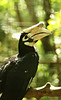 hornbill (pixelplated) Tags: philippines palawan canonef24105mmf4lisusm palawanwildliferescueandconservationcenter