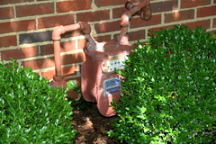 Brinker Garden - painted meter (Pandorea...) Tags: plants painted gas shade meter planting disappear boxwoods