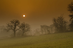 Misty Morning (Peter Quinn1) Tags: sheffield bannerdale bannerdalecentre sunrise mist morning silhouette tree trees