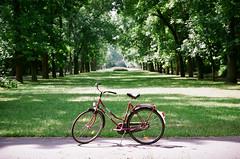Faithful steed (bartekodias) Tags: park city urban film bike analog fuji poland polska ascot fujireala negative reala citypark lodz łódź nikonn75 n75 citybike cruiserbike f75 nikonf75 batavus urbanbike faithfulsteed autaut josefpilsudskipark batavusascot