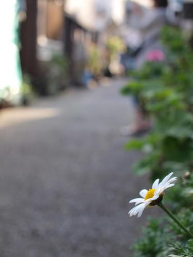 路地のお花