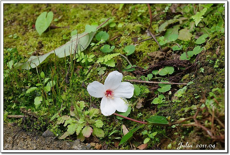 仁山植物園 (21)
