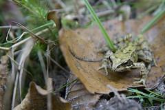 Fort de Rambouillet (Christophe ALARY) Tags: automne promenade grenouille rambouillet