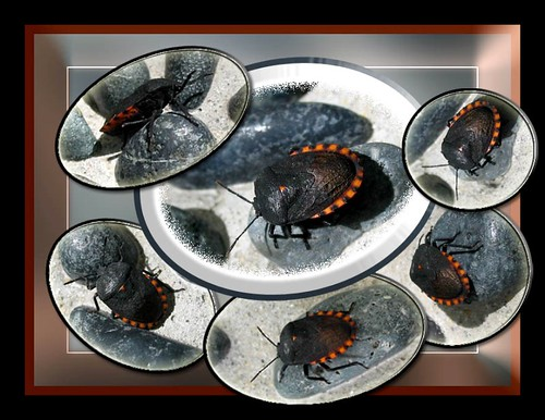 Second Photomontage of 6 pretty bugs