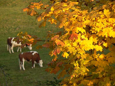 feuillages d'automne.jpg