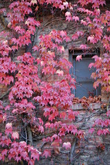 The Old Cary House Hotel (~Think Peace ~) Tags: pink autumn fall colors leaves hotel oldbuildings