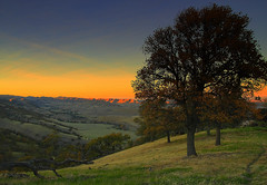 twilight view (Marc Crumpler (Ilikethenight)) Tags: california trees sunset canon twilight searchthebest trails eastbay ebrpd blueribbonwinner contracostacounty eastbayregionalparkdistrict interestingness472 i500 tamron1750 25faves sfchronicle96hours 40d ebparks superbmasterpiece treesubject superhearts jalalspagesnaturealbum canon40d theperfectphotographer explore11dec07 ebparksok