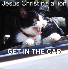 JESUS CHRIST IT�S A LION