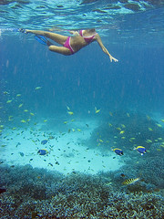 Thailand's snorkeling (elosoenpersona) Tags: world travel sea woman fish tourism girl coral swimming swim thailand island islands mar marine asia chica underwater snorkel wildlife dive tailandia diving viajes turismo bao islas similan buceo viajar asiatic blueribbonwinner miang supershot submarina bucear 10faves kosimilan 25faves mywinners abigfave platinumphoto anawesomeshot impressedbeauty ultimateshot superbmasterpiece diamondclassphotographer flickrdiamond naturewatcher elosoenpersona goldstaraward komiang gettyvacation2010