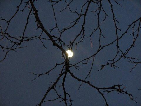 moon rising in St Louis 200108