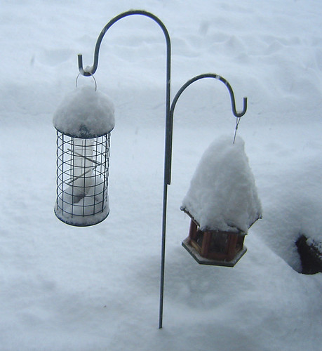 Home - Bird Snow
