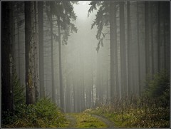 Wald oder Kathedrale - forest or cathedral