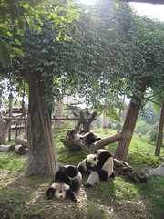 china37.jpg