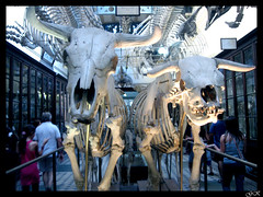 Bones II (LordGK) Tags: light color contrast cows bones museo laplata colorphotoaward