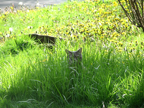 huntress in the grass
