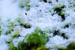 20170107_Gorge_du_Fier (13 sur 14) (calace74) Tags: fier gorgedufier lovagny rhonealpes france gel hiver neige paysage rivière