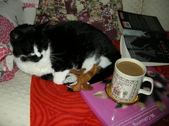 Thank you all for making my human feel bad (pasta_the_cat_supreme_ruler) Tags: coffee beautiful cat book amazing adorable pasta plush sparrow stunning mug colette coffeedrinkersanonymous
