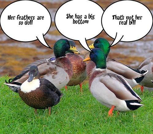 Gossiping Ducks. by foxypar4.