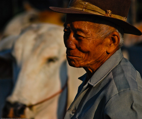 Cattle trader at San Pa Tong market, northern Thailand