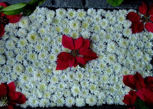 Guatemala Christmas Flowers