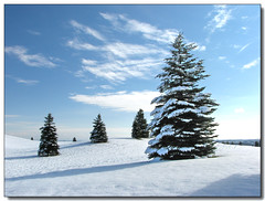 Snowy Trees (Lisa-S) Tags: blue trees winter sky snow ontario canada clouds rural landscape bravo shadows framed lisas explore interestingness106 soe allrightsreserved invited themoulinrouge caledon blueribbonwinner 5199 supershot i500 mywinners mywinner platinumphoto flickrplatinum ysplix amazingamateur theunforgettablepictures thegardenofzen thesecretlifeoftrees theroadtoheaven thegoldendreams goldstaraward bramptoncityhallexhibition getty2009 soldongetty escarpmentsideroad copyrightlisastokes getty20090217
