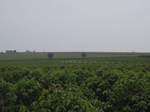 Panoramic View of Fazenda Cafelandia