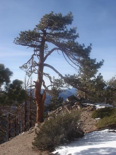 Views along Throop's North Ridge