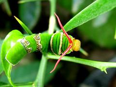 Caterpillar Warning