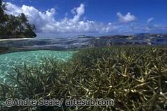 Truk Lagoon coral