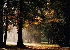 Octobre - अक्टूबर - 8 (10) - 十月 (Pierre♪ à ♪VanCouver) Tags: autonme vancouver park canada forest autumn queenelisabethparrk canonf1 35mmfilm 秋