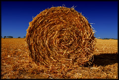 Hay!  Kansas (crowt59) Tags: blue sky golden heartland kansas hay eyewashdesign
