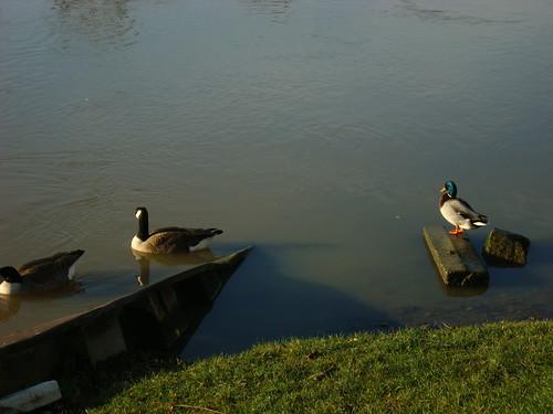 Au bord de la Seine originales (104)