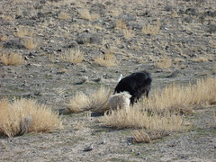 cannon 027 (Sharri2) Tags: utah hunting geode